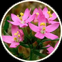 Detoxic: ramuan semulajadi di dalam ubatan anti-parasit