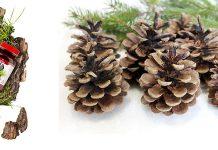 Pine Pollen - harga, komposisi, promosi, yang sah di forum. Beli di farmasi atau perintah pada web pengeluar?